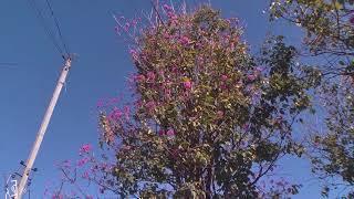 Um morador do bairro Sebastião Amorim, reclama das dificuldades que vem encontrando para realizar a poda de uma árvore.