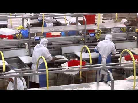 VIVIERS MARINS : une maîtrise responsable de la filière poisson