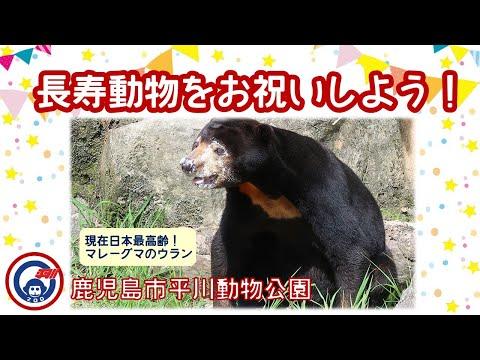 平川動物公園の長寿動物をお祝いしよう!