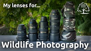 Choosing a lens for wildlife photography