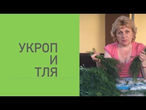 УРОП И ТЛЯ .