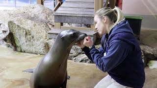 A Day In The Life Of A Sea Lion Trainer: The Vlog Ep 1