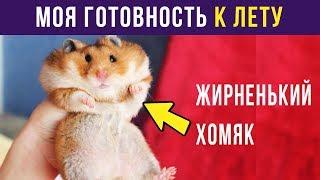 Приколы. К ЛЕТУ ГОТОВ   Мемозг #84