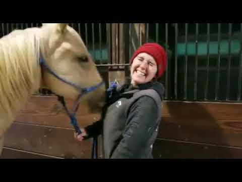 A Horse Discovers Zippers with Hilarious Consequences