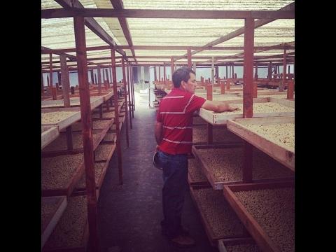 Secadora solar de café. Ing. Carlos Roberto Fuentes Guerra (video completo)