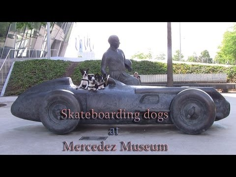 Amazing Dogs skateboarding at Stuttgart