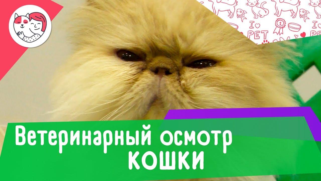 4 обязательных пункта ежегодного ветеринарного осмотра кошки