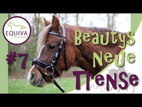 [EQUIVA Serie] #7 - Beauty bekommt eine neue Trense mit Lack & Strass