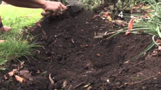 How and When To Plant Daffodil Bulbs