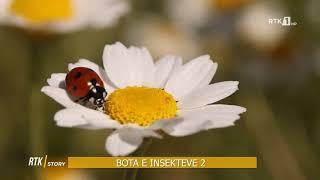 RTK Story - Bota e insekteve 2 11.06.2021