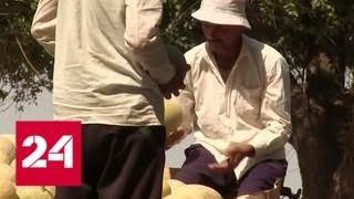 Казахские крестьяне устроили перестрелку во время продажи дынь - Россия 24
