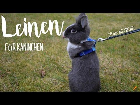 Leinen für Kaninchen