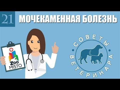 Мочекаменная болезнь у домашних животных | Лечение мочекаменной болезни | Советы Ветеринара