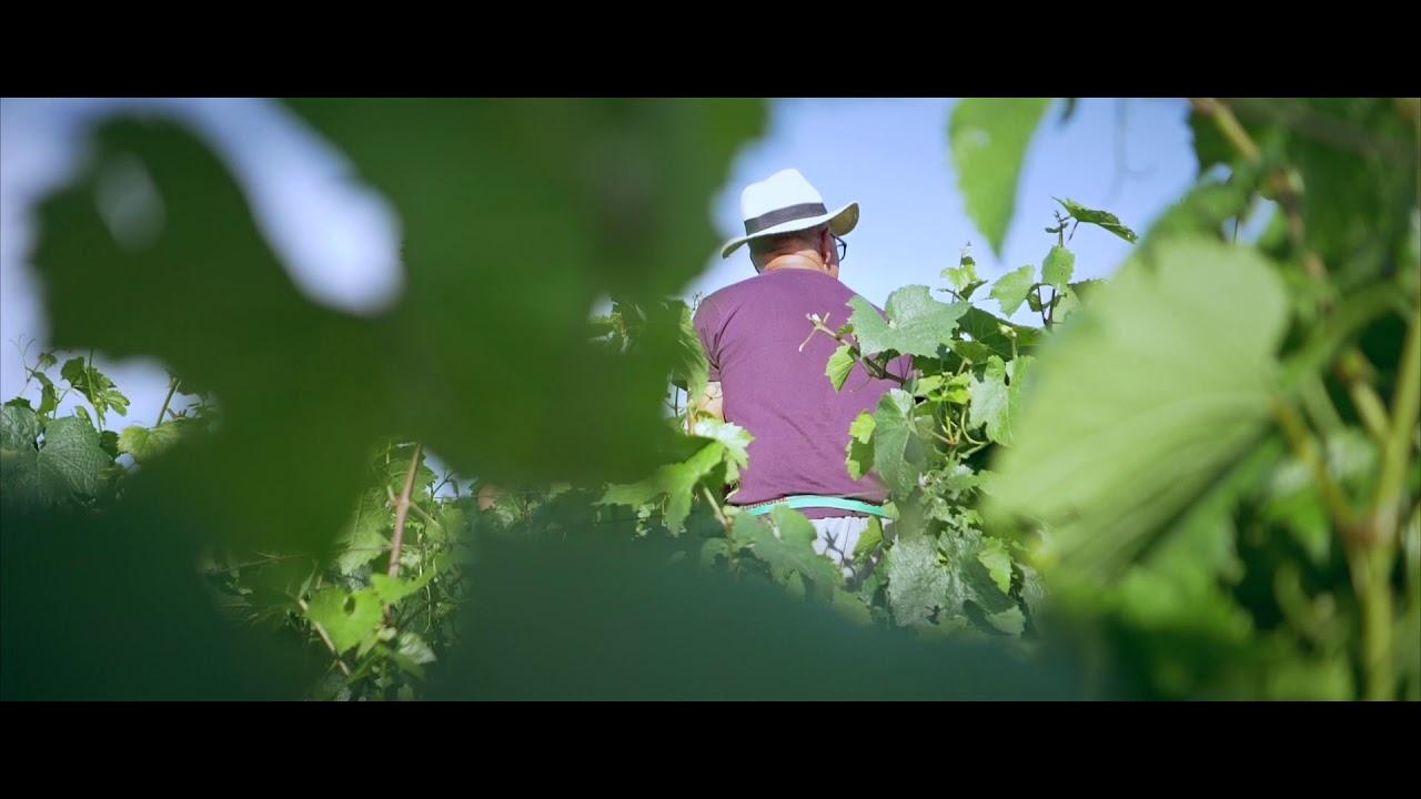 Image de la video de l'offre Tricon Olivier