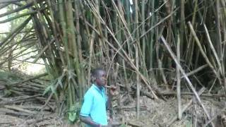preview picture of video 'Bamboo in Rural Nigeria.mp4'