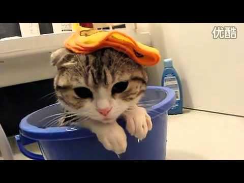 貓貓獨自洗澡發呆