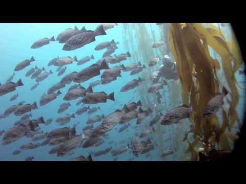 Liquid Image Wide Angle Cameras - DEMA show 2011