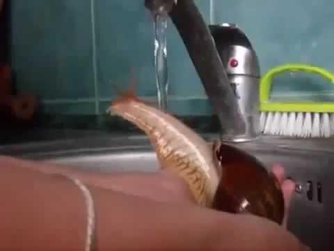 La lumaca si fa una doccia rinfrescante