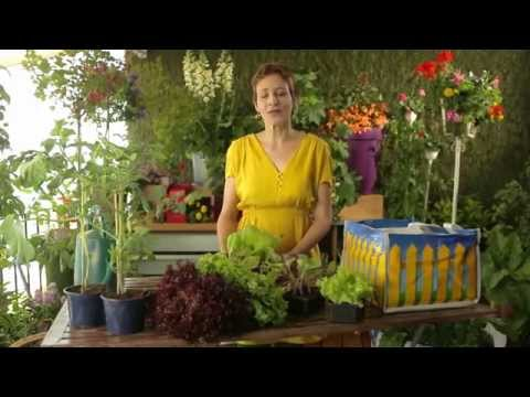 Sabines Gartenschule: Pflanzsack - Gurken und Salat