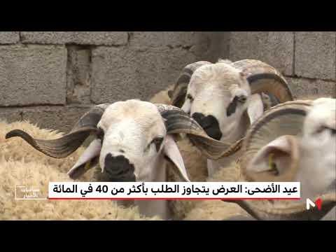 العرب اليوم - العرض يتجاوز الطلب على الماشية بأكثر من 40% في المغرب