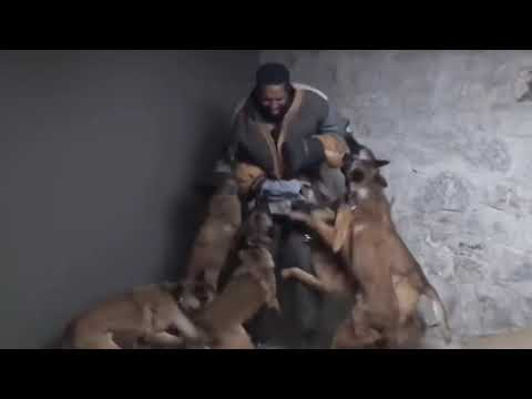 The best motivational video for me dogs Malnua coolest dog in the world