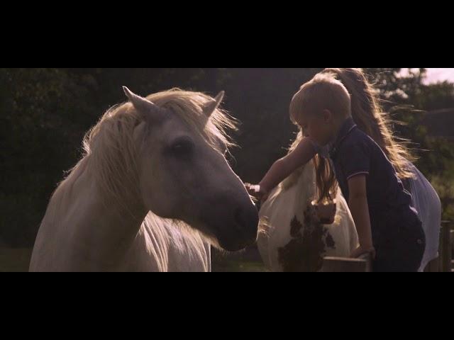 White Horses  - Paul Weller