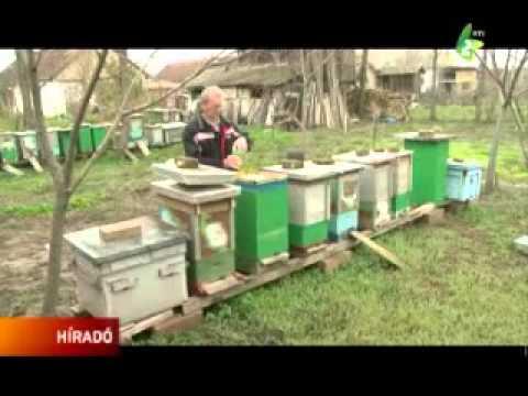 Méhészeink sikerei letöltés