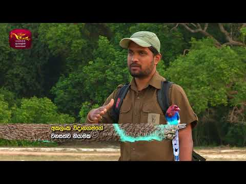 Sobadhara - සොබාධාරා | Season 2 | Episode - 24 | 2018-07-06 | Rupavahini Documentary