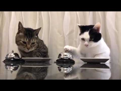 Cats Ringing for Dinner