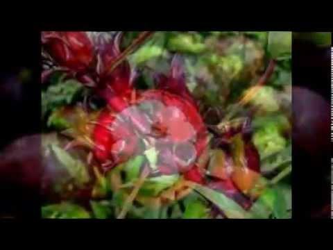 Video cara mengobati radang tenggorokan dengan cepat