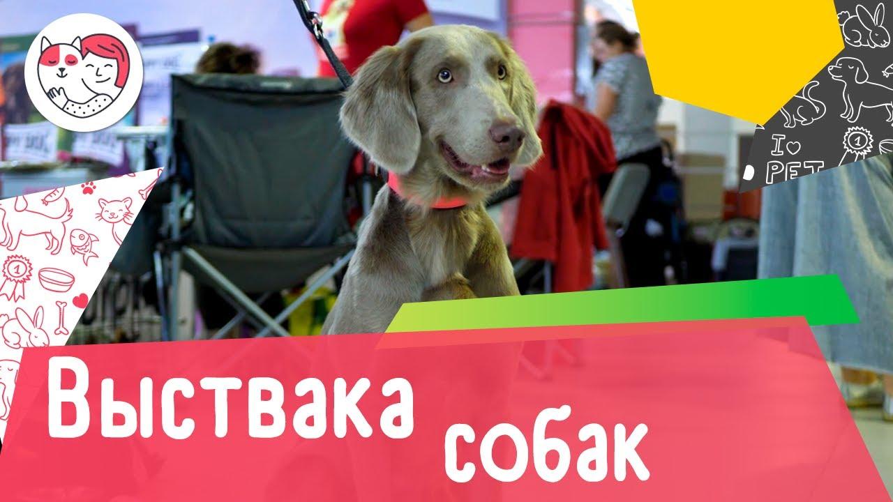 5 популярных вопросов о выставках собак