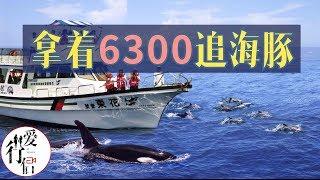 台湾旅拍vlog-5【特殊体验-太平洋出海赏鲸】太平洋看海豚 Taiwan Tourism、Watch Whales And Dolphins In The Pacific Ocean、vlog
