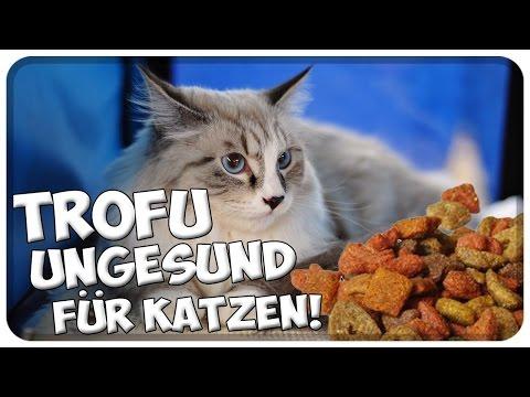 Trockenfutter schädlich für Katzen! Warum man seiner Katze kein Trockenfutter füttern sollte!