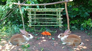 Amazing Quick Rabbit Trap Using Bamboo - How To Make Rabbit Trap With Bamboo That Work 100%