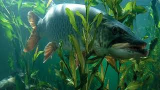 Схемы звуковая приманка для рыб