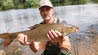 Fantastic day chub and barbel fishing on the Trent