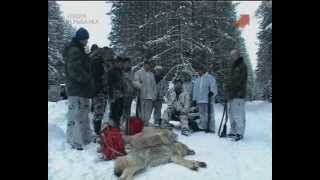 Смотреть онлайн Зимняя охота на волков