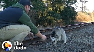 Guy Finds Lost Husky On Train Tracks | The Dodo