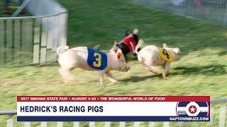 2017 Indiana State Fair Pig Racing