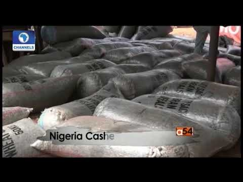 Focus On Cahew Production In Nigeria | Africa 54 |