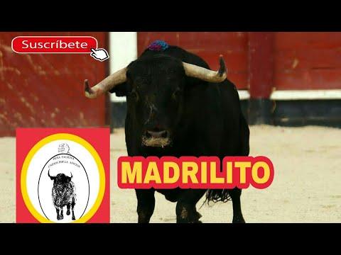 Impresionante toro a cajón en Colmenar de Oreja