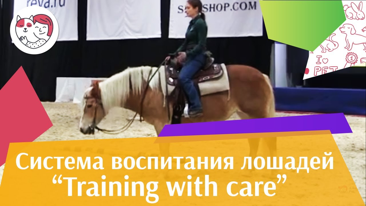 Шоу презентация системы воспитания Training with care Ч 1 Дарья Бойцова ЭКВИРОС 2016 iLikePet