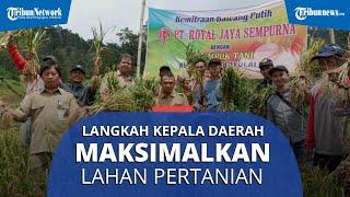 Apa yang Bisa Dilakukan Kepala Daerah di Solo Raya untuk Maksimalkan Sektor Pertanian? Ini Kata Ahli