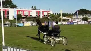 Dylano Nederlands Kampioen 2019 (2)