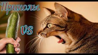 Подборка приколов 2019 коты против огурцов испуги кошек