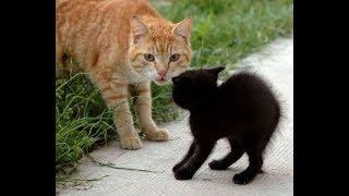 смешной кот/новые смешные видео про котов