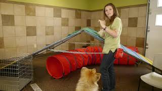 How to Bring a Cat Into a Home With Dogs