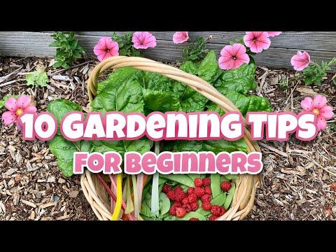 , title : '10 Beginner Gardening Tips - Gardening for Beginners, Garden #Stayhome #Withme'