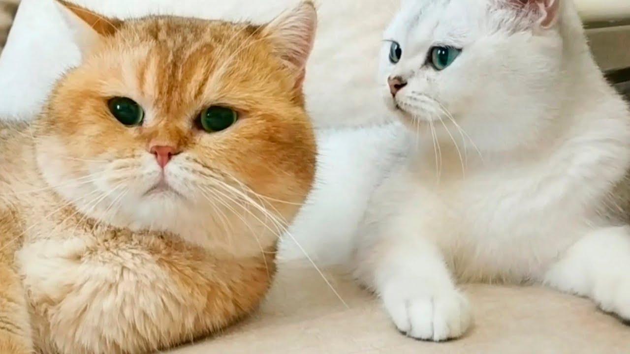 Как Жена - кошка разговаривает со своим Мужем - Котом? 😍 фото