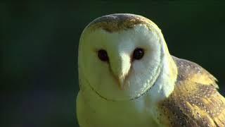 OWLS ODYSSEY ||  Full Documentary - HD 1080pi.